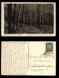 Koserow Ostseebad auf Usedom sw-AK Buchenwald 1926 (d5451)